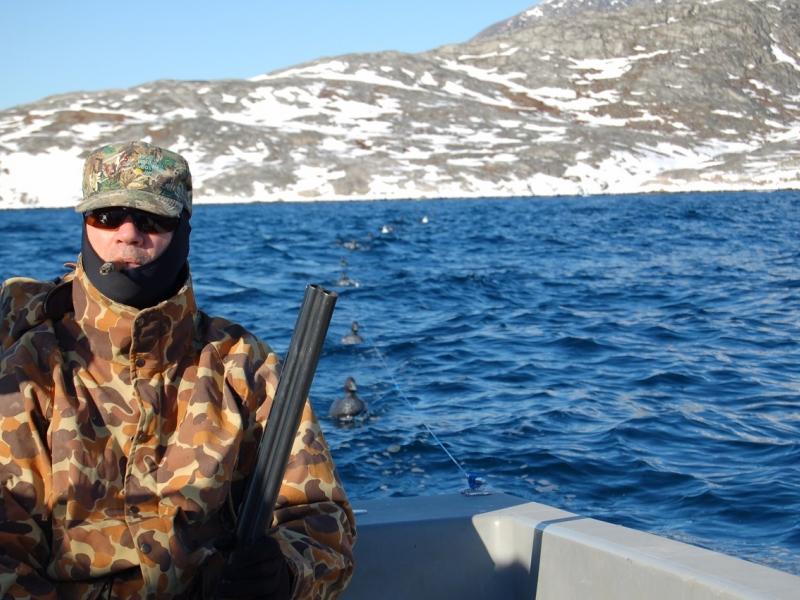 King Eider Hunting Greenland